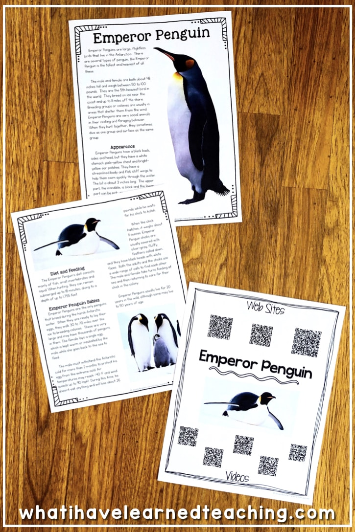 medium resolution of All About Penguins - Informational Reading and Writing for Winter