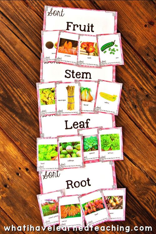 small resolution of What Part of the Plant Do We Eat - Science Sort