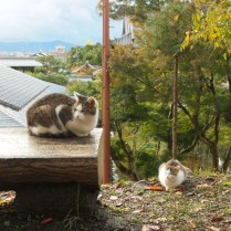 kyoto-day-3-cats-on-the-philosophers-path_4100947137_o