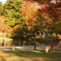 kyoto-day-5-deer-park_4106528252_o