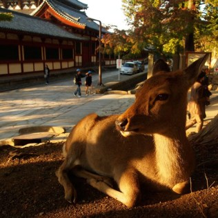 kyoto-day-5-deer_4105761445_o