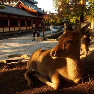kyoto-day-5-deer_4105761445_o