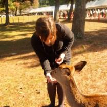 kyoto-day-5-feeding-the-deer_4105759137_o
