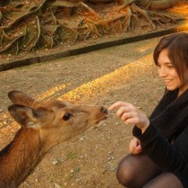 kyoto-day-5-feeding-the-deer_4105762587_o