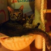 kyoto-day-6-catty-family_4110134108_o