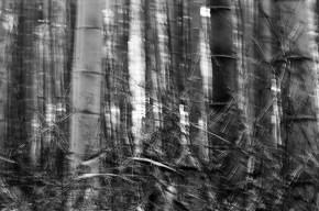 bamboo-grove_4117185818_o