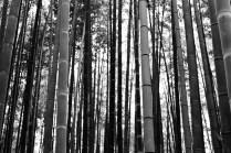 bamboo-grove_4117186150_o