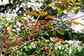 berries_4115069720_o