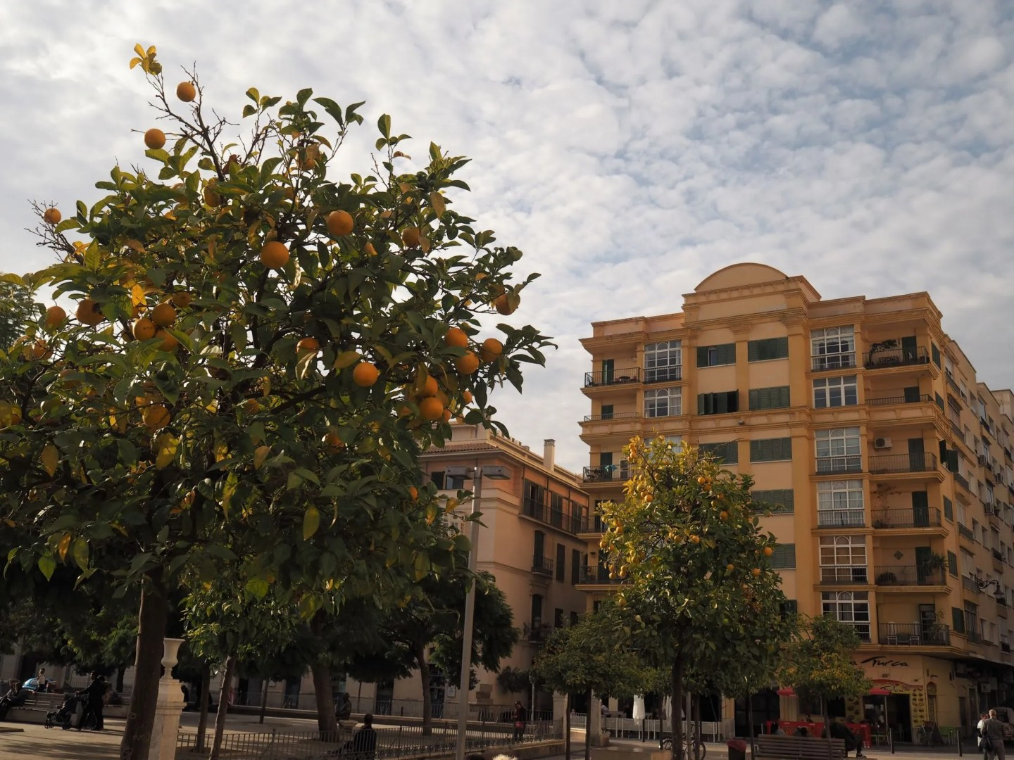 What Lizzy Loves Malaga in November yellow buildings orange trees