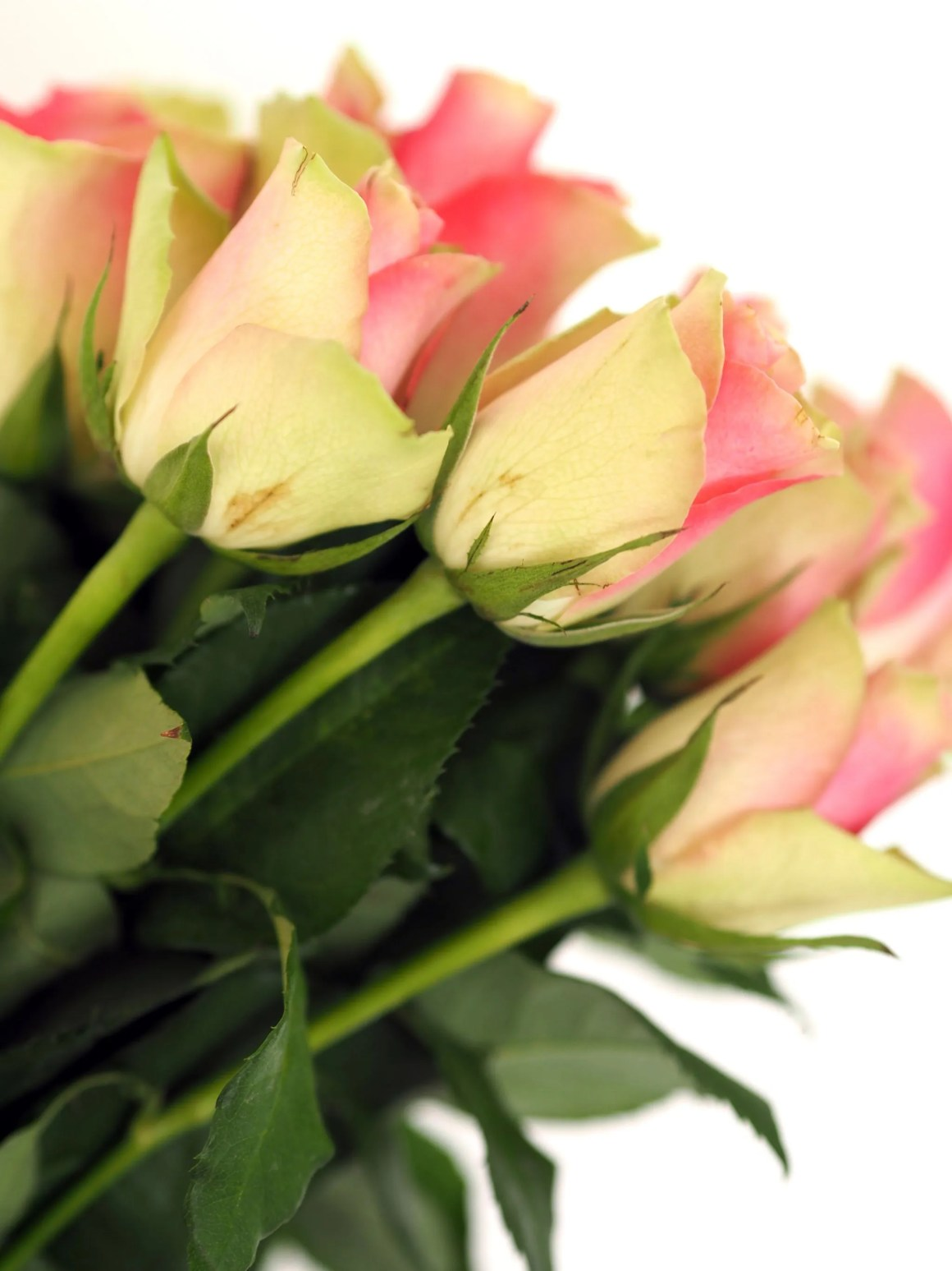 what lizzy loves pink and green roses