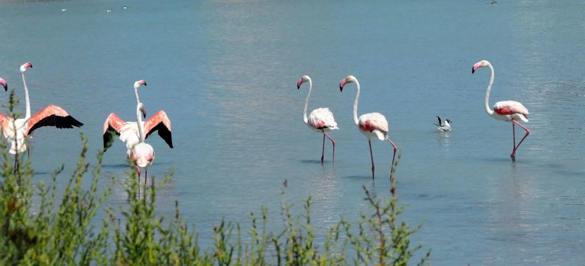 flamingo salt lake calpe