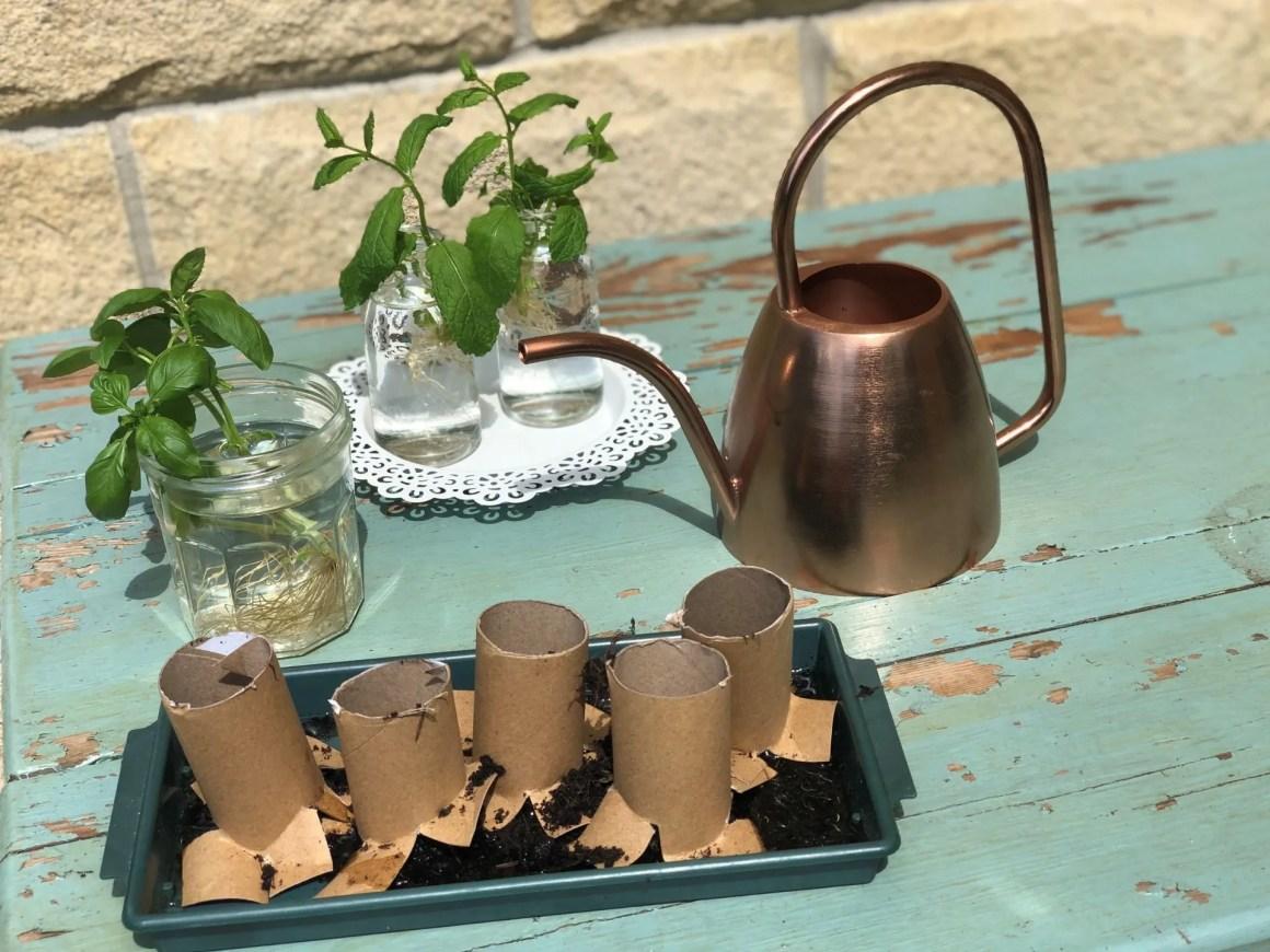 taking herb cuttings