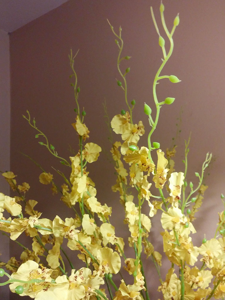 """Misswarm 10 PIECES 41.3""""of Dancing Lady Orchid"""