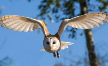 air animal totems