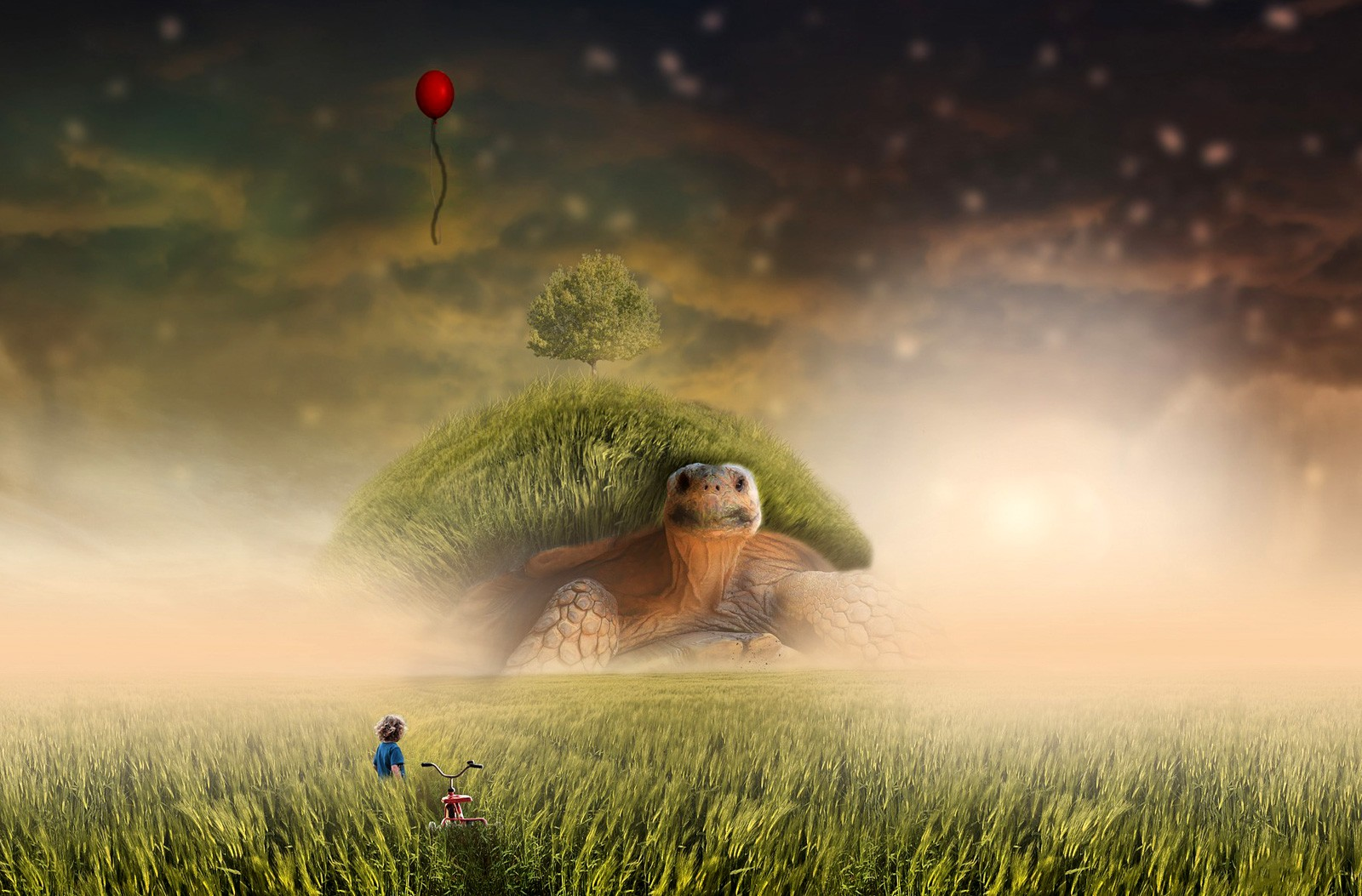 Dream Interpretation: the field what dreams 46