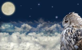 Animals In Dreams and Interpreting Dreams with Animals