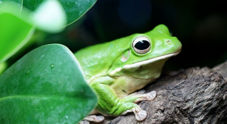 animal symbolism frog meanings