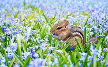 animal symbolism of spring - animal signs of spring