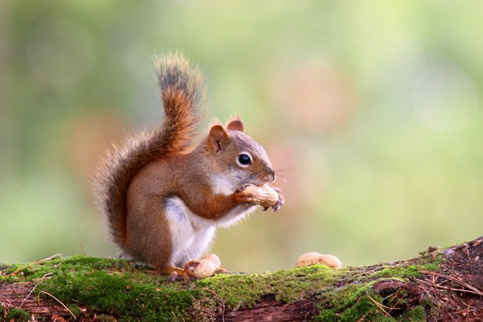 Animal Symbolism Squirrel Meaning On Whats Your Sign