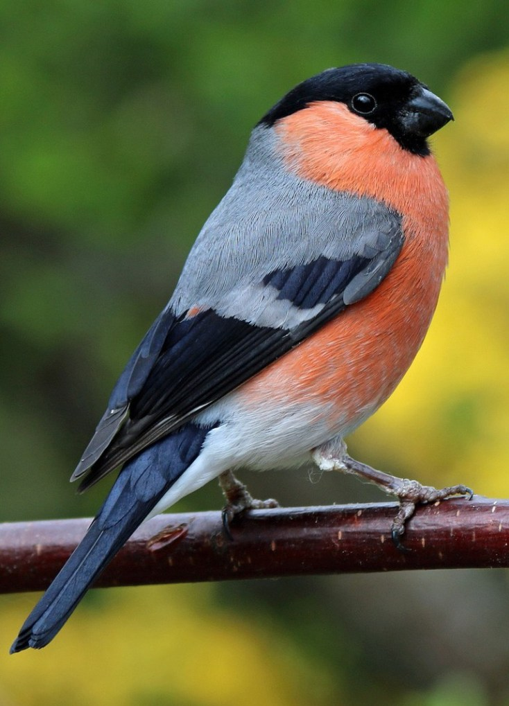 Bird Meaning Finch Meaning And More On Whats Your Sign