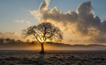 celtic meaning of the oak tree and celtic ogham oak tree meaning