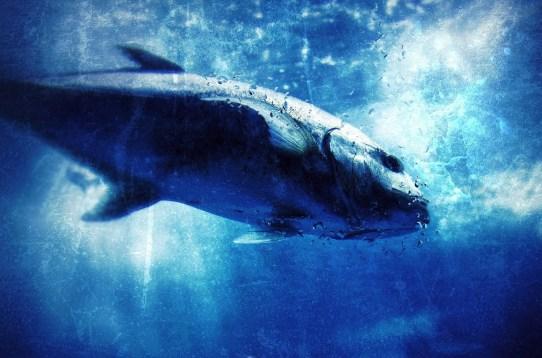 Risultati immagini per celtic animals fish