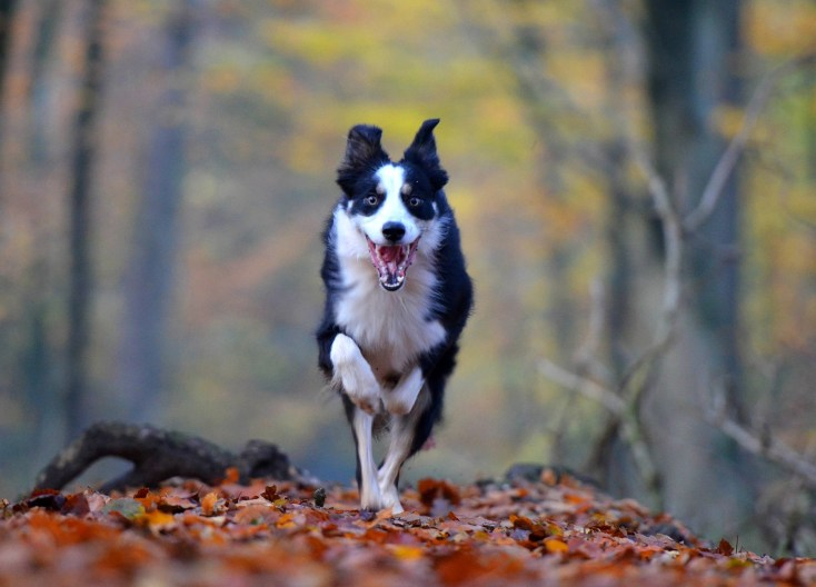 Dog Meaning And Dog Symbolism On Whats Your Sign