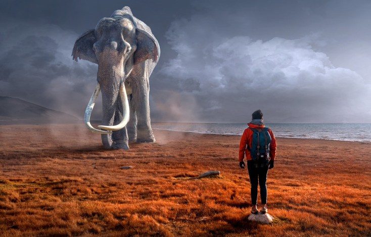 Elephant Meaning And Elephant Symbolism On Whats Your Sign
