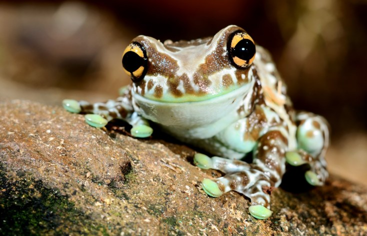 Animal Symbolism Frog Meaning On Whats Your Sign