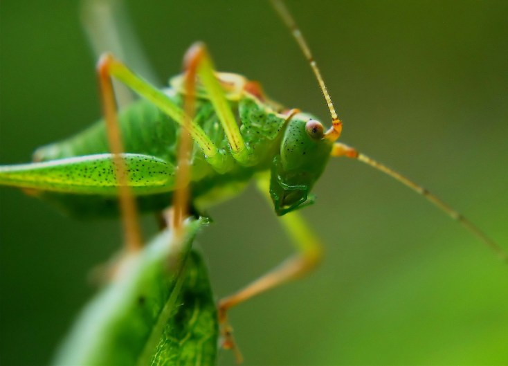 Symbolic Meaning Of Crickets On Whats Your Sign