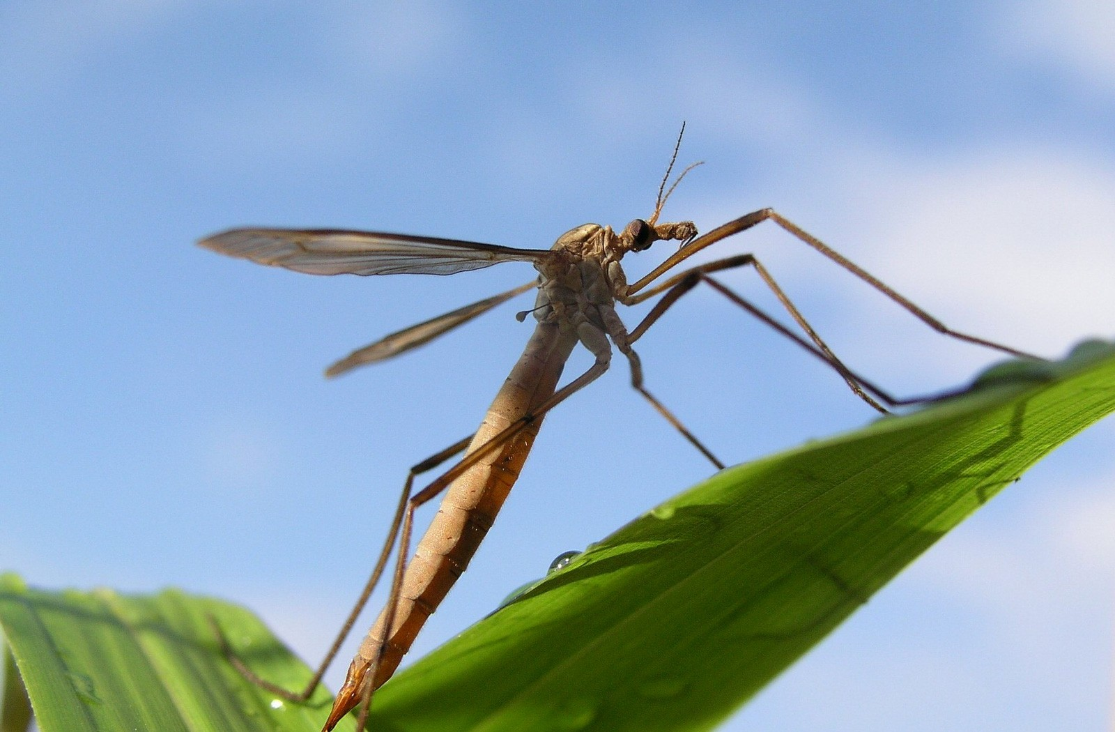Insect Meaning Crane Fly Symbolism On Whats Your Sign