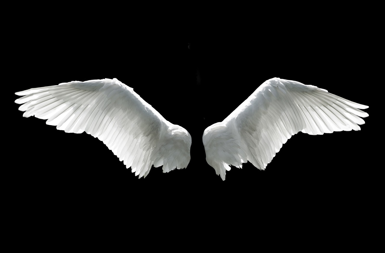 Symbolic Meaning Of Wings On Whats Your Sign
