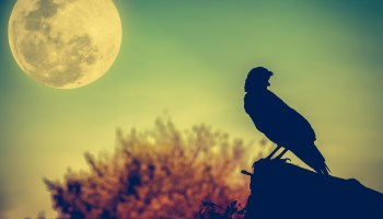Symbolic Moon Facts and Meanings on Whats-Your-Sign com