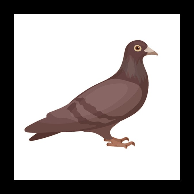 Dove Meaning Mother Symbol Whats Your Sign