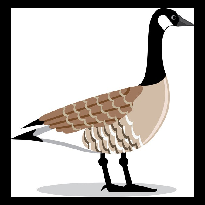 Goose Meaning And Mother Symbol Whats Your Sign