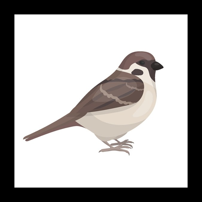Sparrow Meaning And Mother Symbol Whats Your Sign