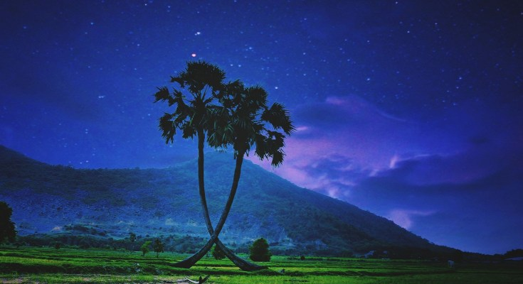 palm tree symbolism and palm tree meanings