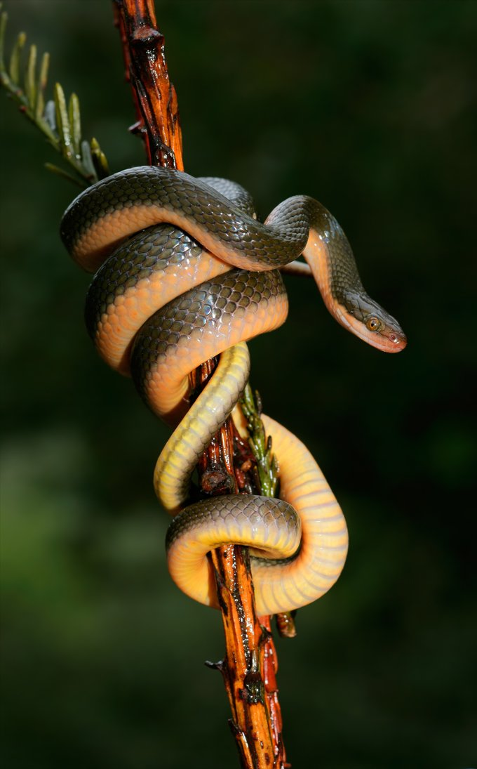 Snake Symbolic Meaning And Snake Totem On Whats Your Sign