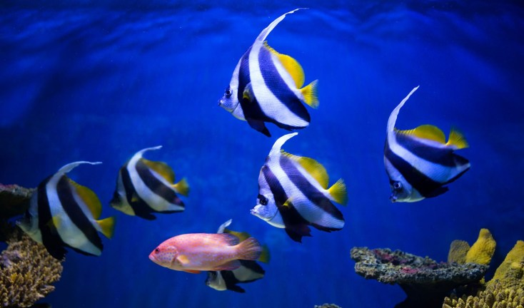 Swimming Into Symbolic Meanings Of Fish On Whats Your Sign