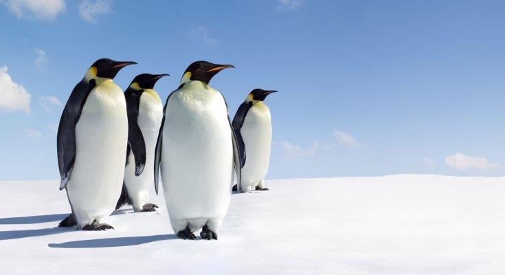 symbolic penguin facts