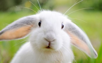 symbolic rabbit meanings