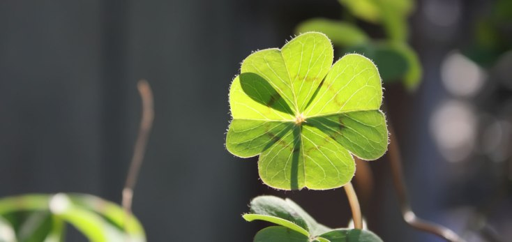Symbolic Shamrock Meaning On Whats Your Sign