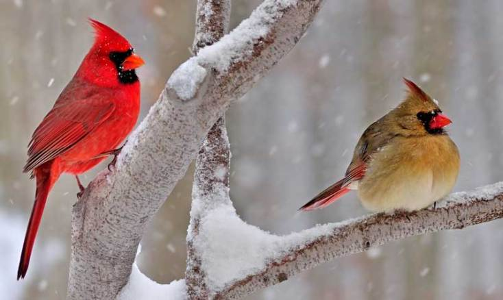 Animal Symbolism Cardinal Meaning On Whats Your Sign