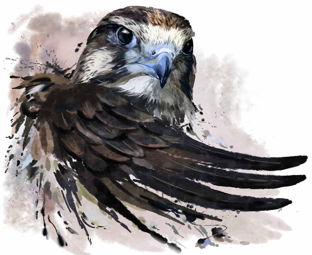 Falcon Tattoo Ideas And Falcon Meanings Whats Your Sign