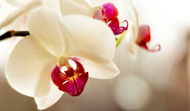 Flower meanings orchid symbolism on whats your sign on another note ancient aztecs mixed a special type of orchid the vanilla orchid with chocolate the aztecs believed this dish made warriors more strong mightylinksfo