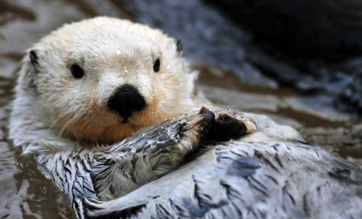 Animal Symbolism Otter Meanings On Whats Your Signcom