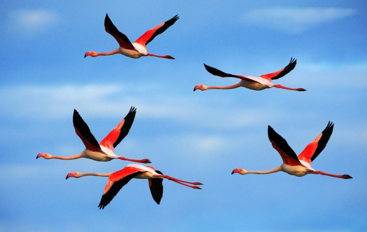 Symbolic Flamingo Facts And Flamingo Totem Meanings Whats Your Sign