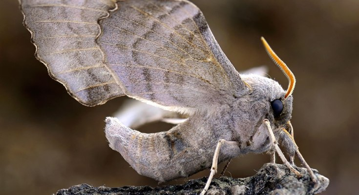 Questions About Moth Meanings