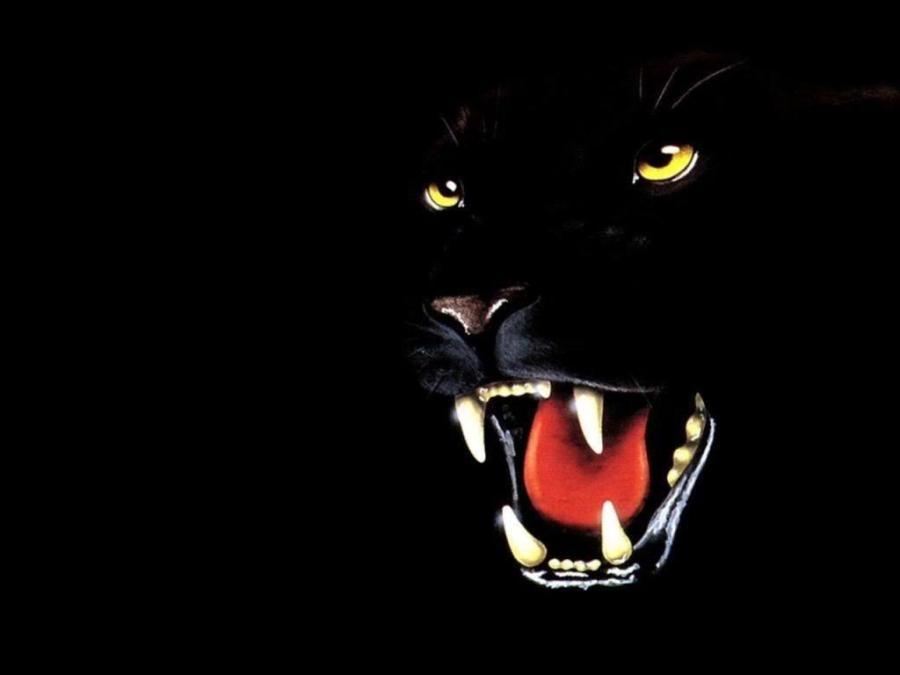 Black Panther Animal Wallpapers