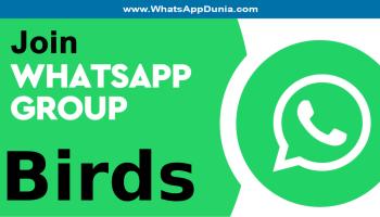 Birds WhatsApp Group Links